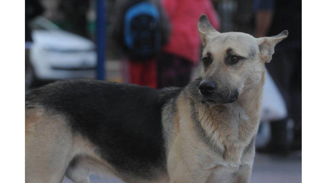 Un hombre murió hace un mes y su perro lo espera en la puerta de la sala velatoria