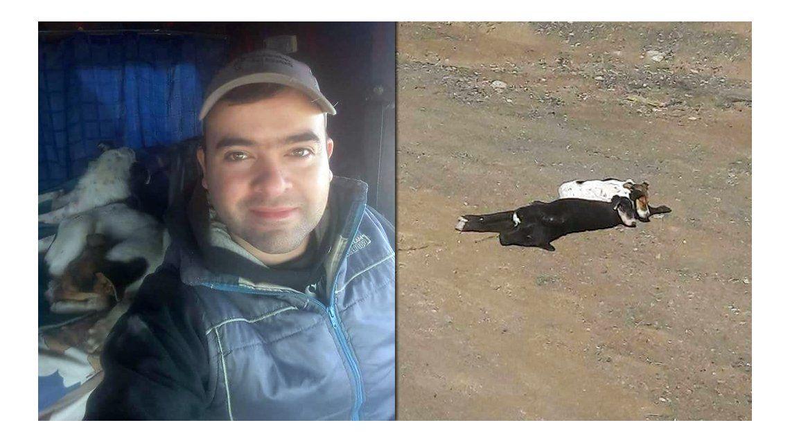Córdoba: un camionero rescató a dos cachorros que estaban sobre su madre muerta