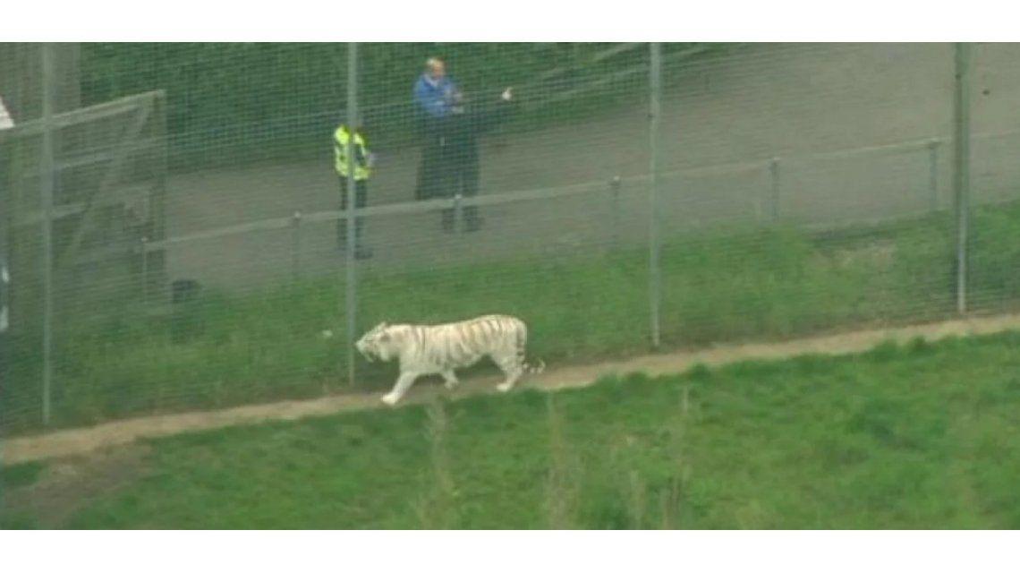 Tigre mató a su cuidadora