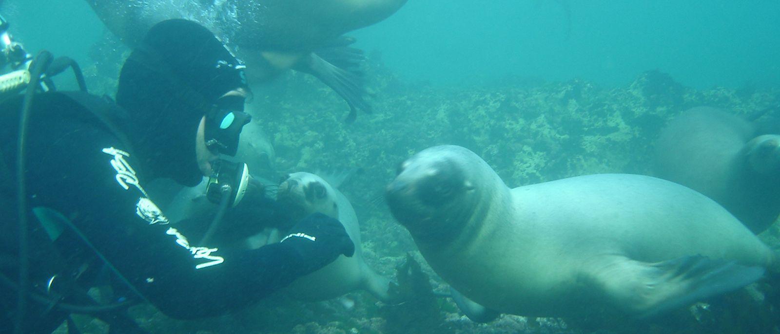Puerto Madryn y Puerto Pirámides son las ciudades favoritas para el buceo