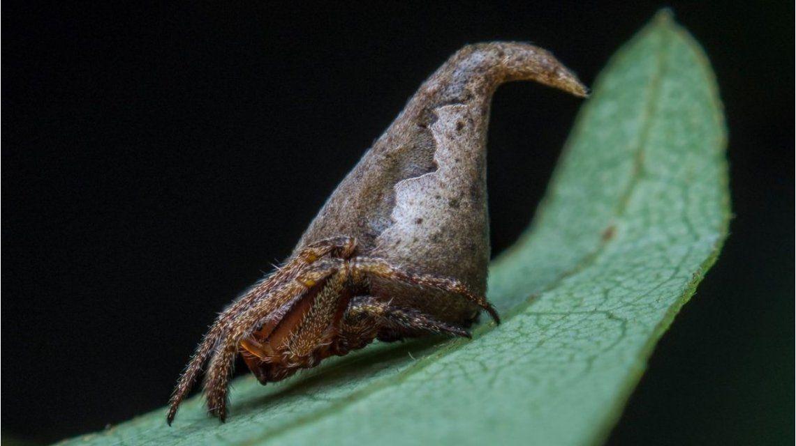 Una araña descubierta que está en el top 10