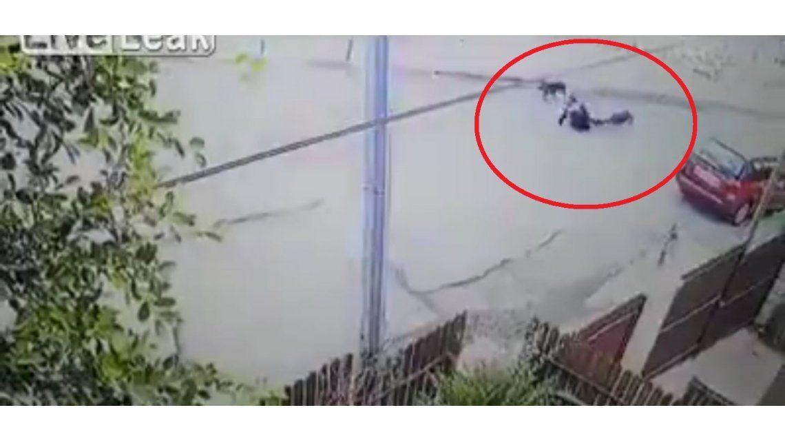 Dos perros atacan a una mujer en el medio de la calle