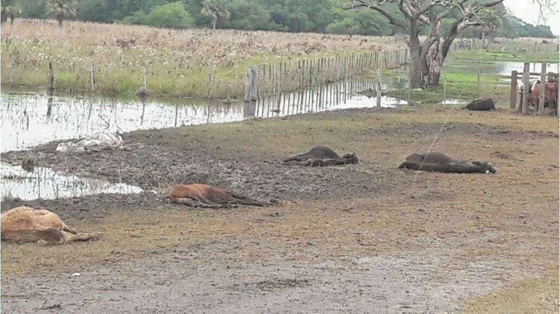 Al menos 50 mil animales murieron por las inundaciones