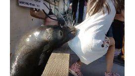 Un león marino atacó a una niña y la arrastró al agua
