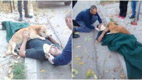 Un perro cuidó a su sueño luego de un accidente