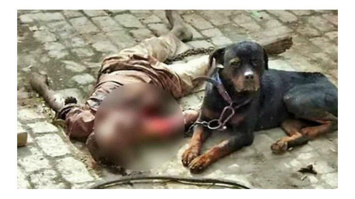 El perro al lado del cuerpo de su dueño después de asesinarlo