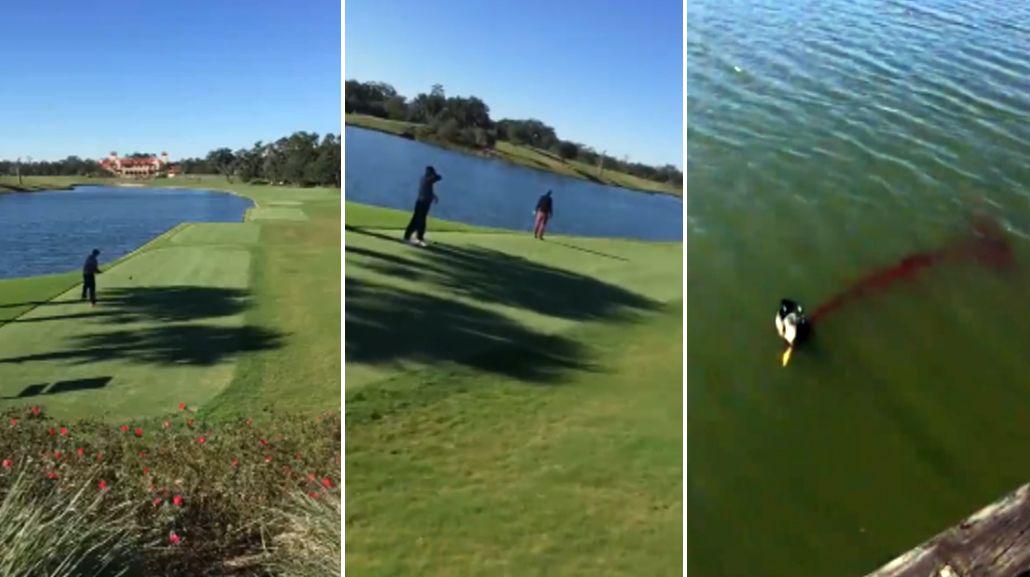 VIDEO: Jugaba al golf, hizo su tiro y mató a un pájaro en el aire