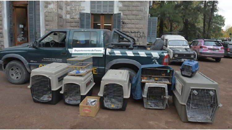 Los animales que fueron secuestrados