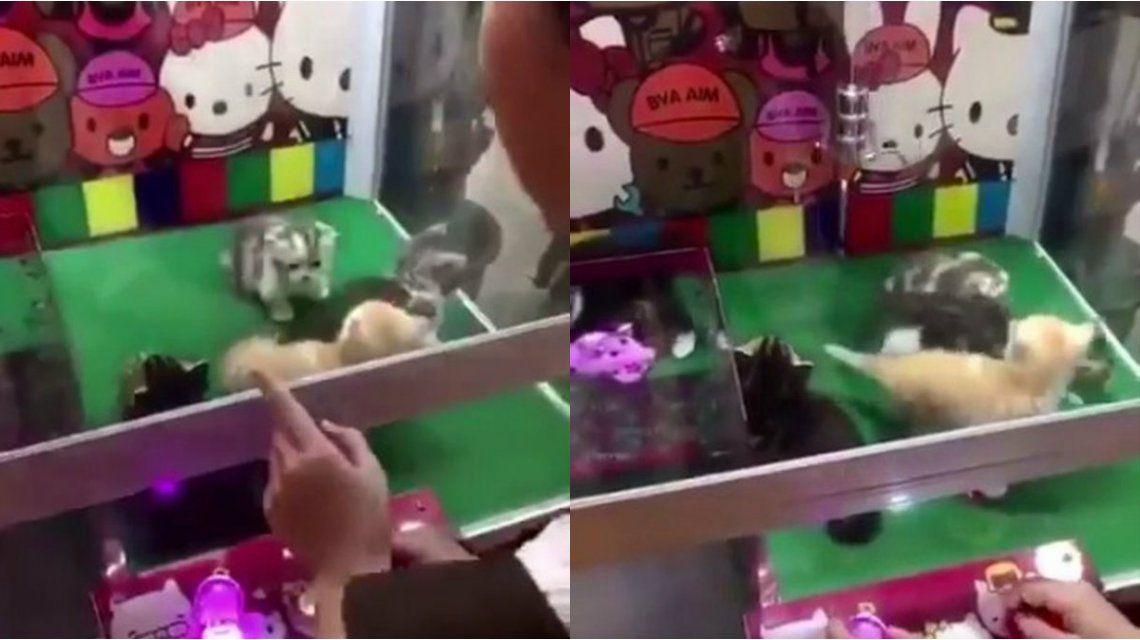 Indignación por la máquina de gatitos