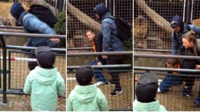 Un hombre molestó a unos leones en un zoo de Holanda