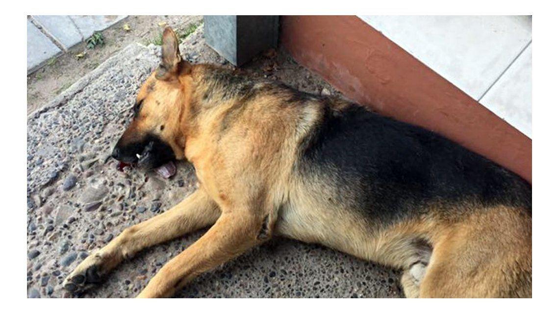 Tommy murió tras ser atropellado en Neuquén
