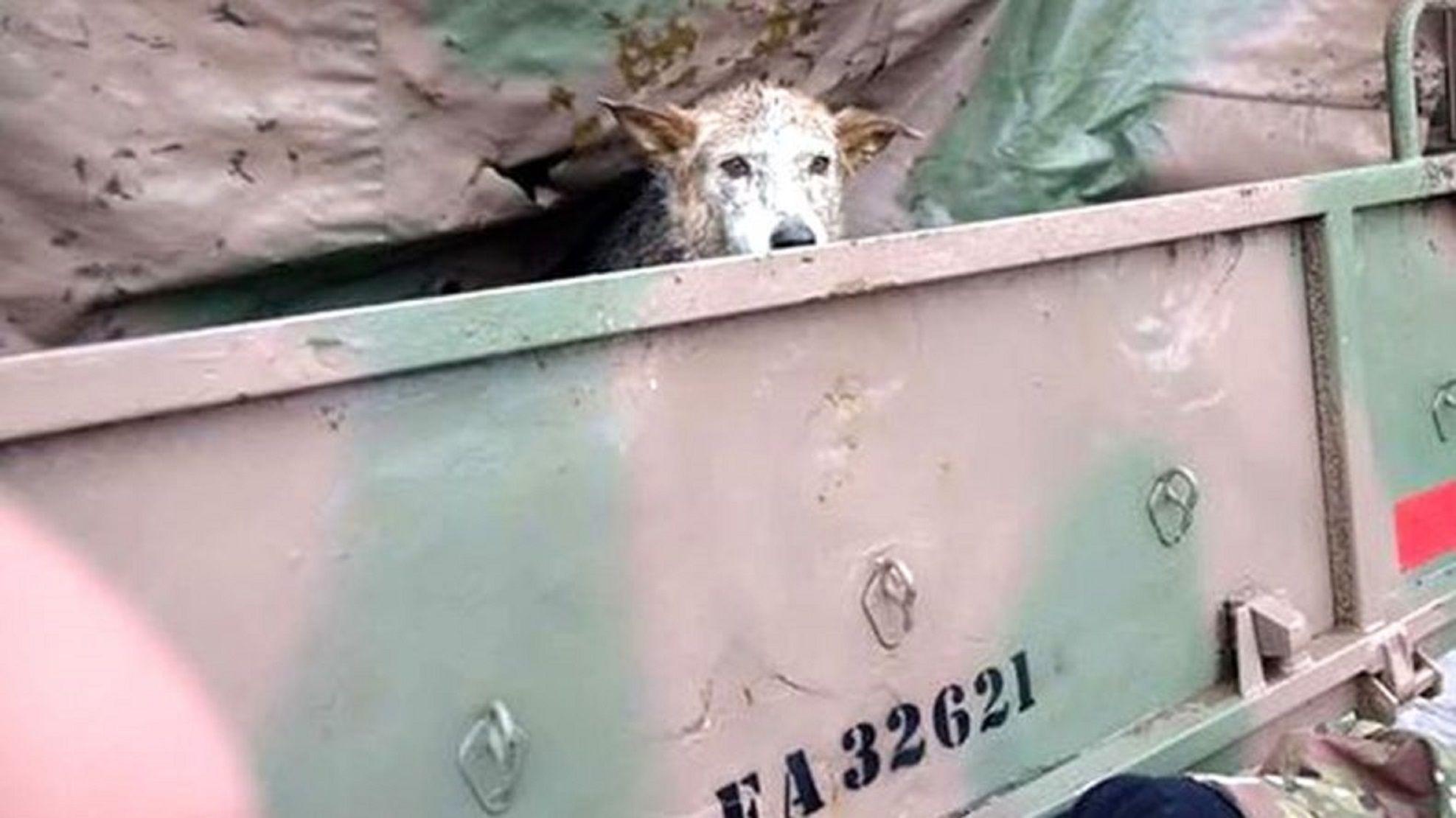 La conmovedora historia de una mascota perdida en el temporal