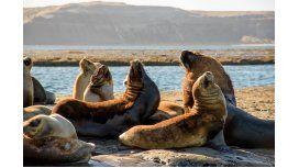 Los lobos marinos, en Puerto Pirámides