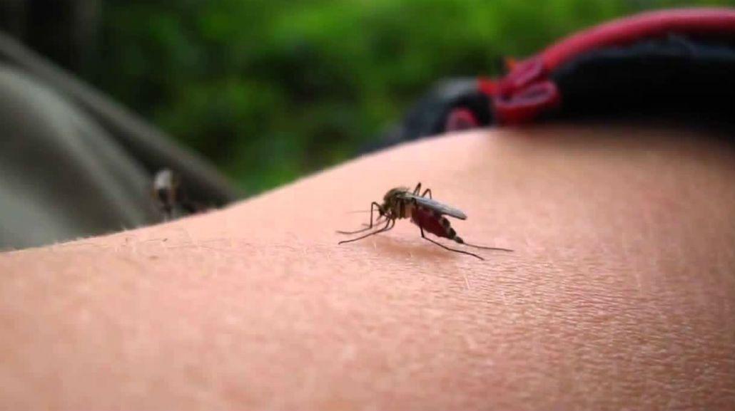 Hay muchos mosquitos en toda la Ciudad