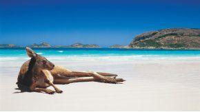Lso canguros conviven con los turistas