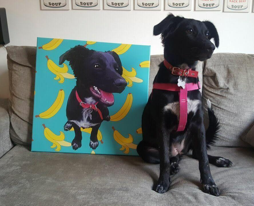 Doggy Style: el amor por las mascotas avanza cada día más