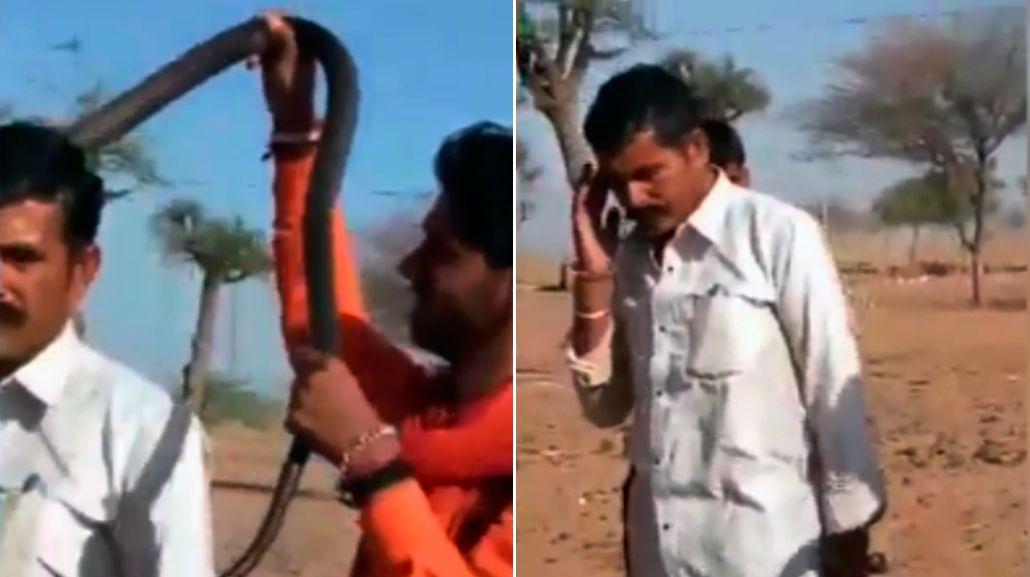 Un hombre murió tras ser mordido por una cobra en la India