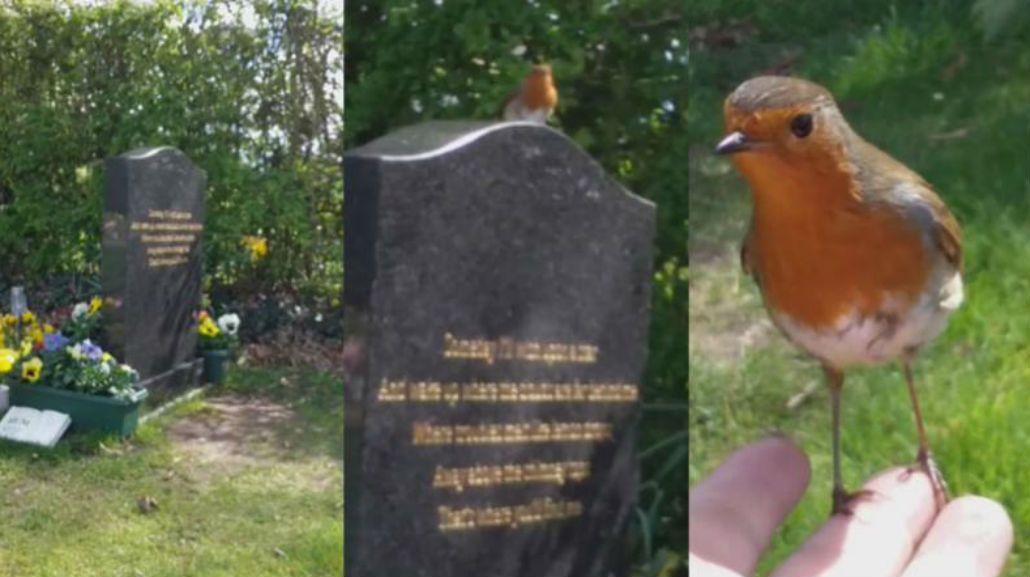 El pajarito se posó en su mano luego de estar en la tumba de su hijo