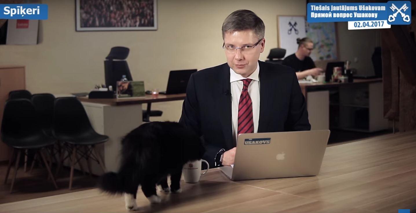 Un gato interrumpió la transmisión de un político