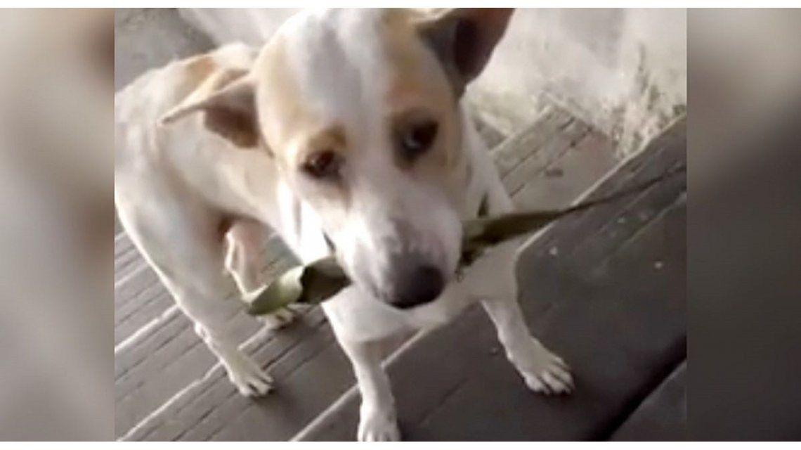 Un perro le agradece a la mujer que lo alimenta con regalos