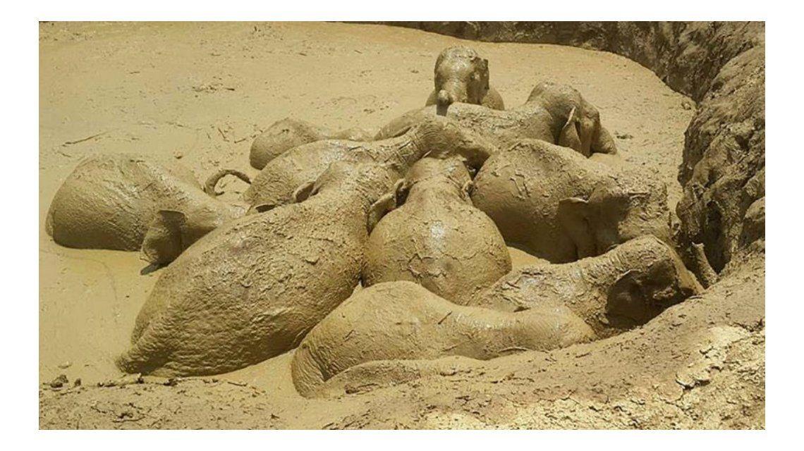 Los elefantes estaban atrapados en el cráter de una bomba