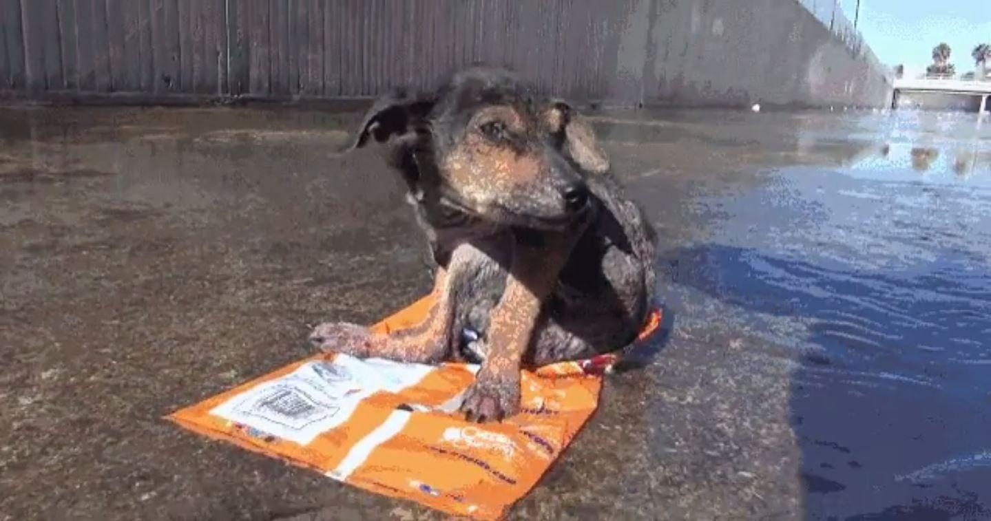 La increíble recuperación de un perro abandonado