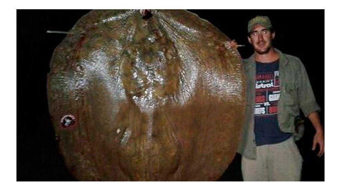 Pescaron una raya gigante en Santa Fe