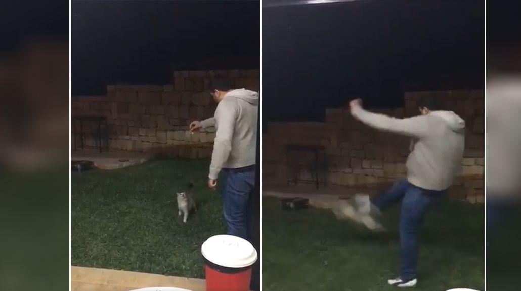 La tremenda patada a un gato que indigna a toda España
