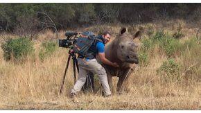 Una rinoceronte se acercó para que le acaricien la panza