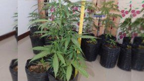 Deturiveron a tres médicos con 19 plantas de marihuana - Crétido:lmneuquen.com