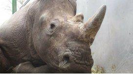 Los cazadores se llevaron el cuerno del rinoceronte