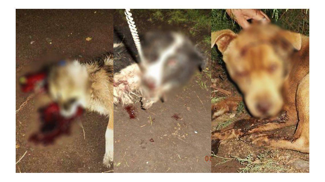 Brutal agresión a tres perritos: los atacaron a punta de hachazos