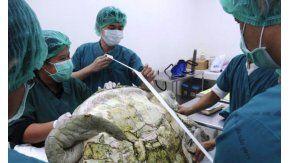 Extrajeron 915 monedas del estómago de una tortuga