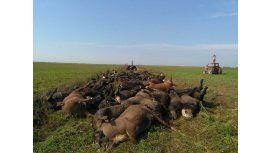 Por el calor, murieron cerca de 60 vacas en La Pampa