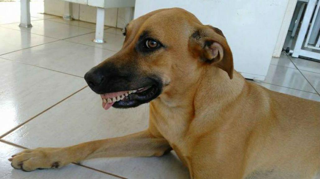 Pandora con la dentadura postiza que encontró en el patio de la casa