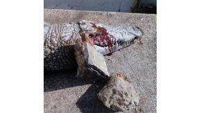 Murió un cocodrilo en un zoológico por piedrazos de visitantes