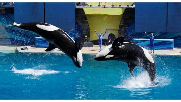 Denuncian uso de animales en espectáculos en la Costa