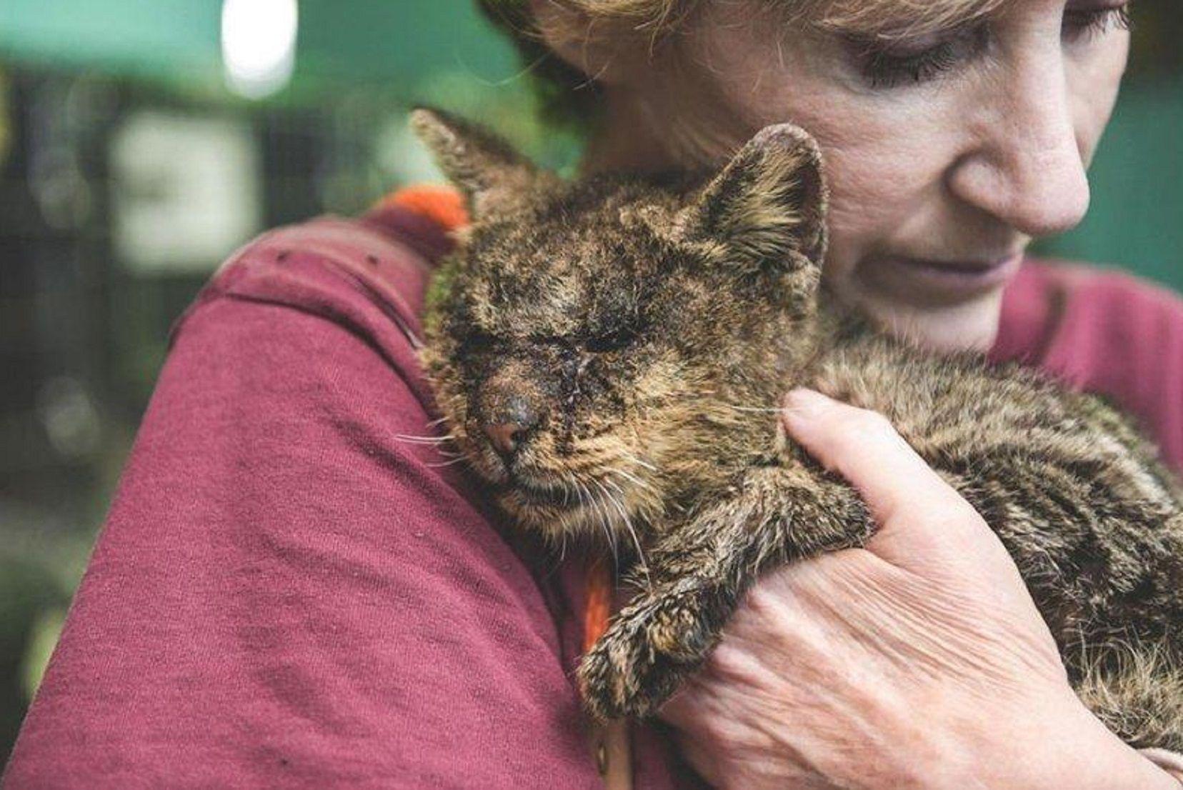 Donaciones salvaron a un gato moribundo