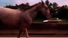 Un caballo, perdido en la Panamericana
