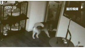 Un perro se escapa de su celda en la perrera