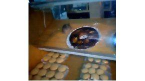 Encontró una rata en el mostrador de una panadería