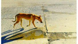 La foto de una perra que terminó con un reencuentro en Chubut