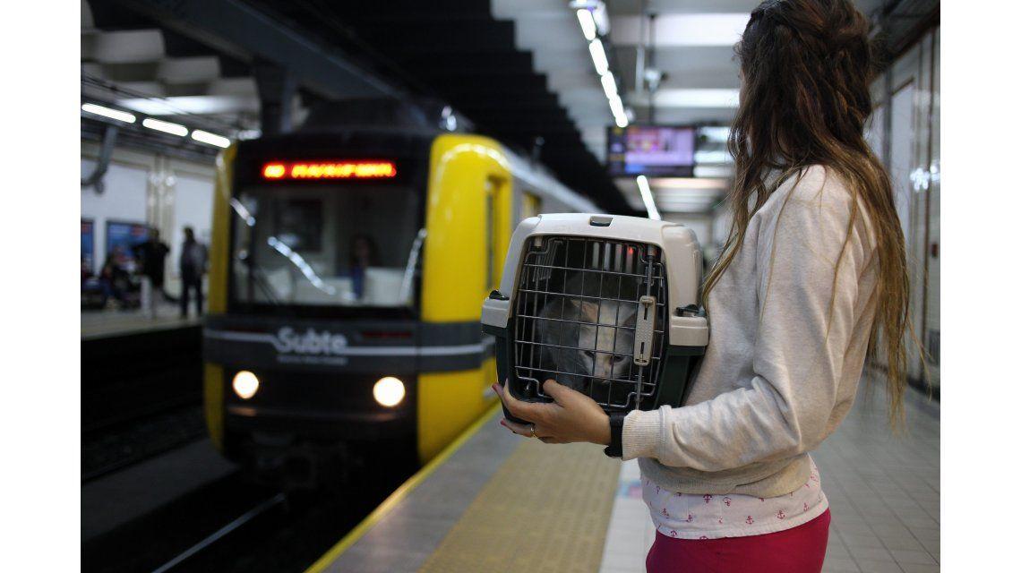 Los gatos y perros podrán viajar en Subte