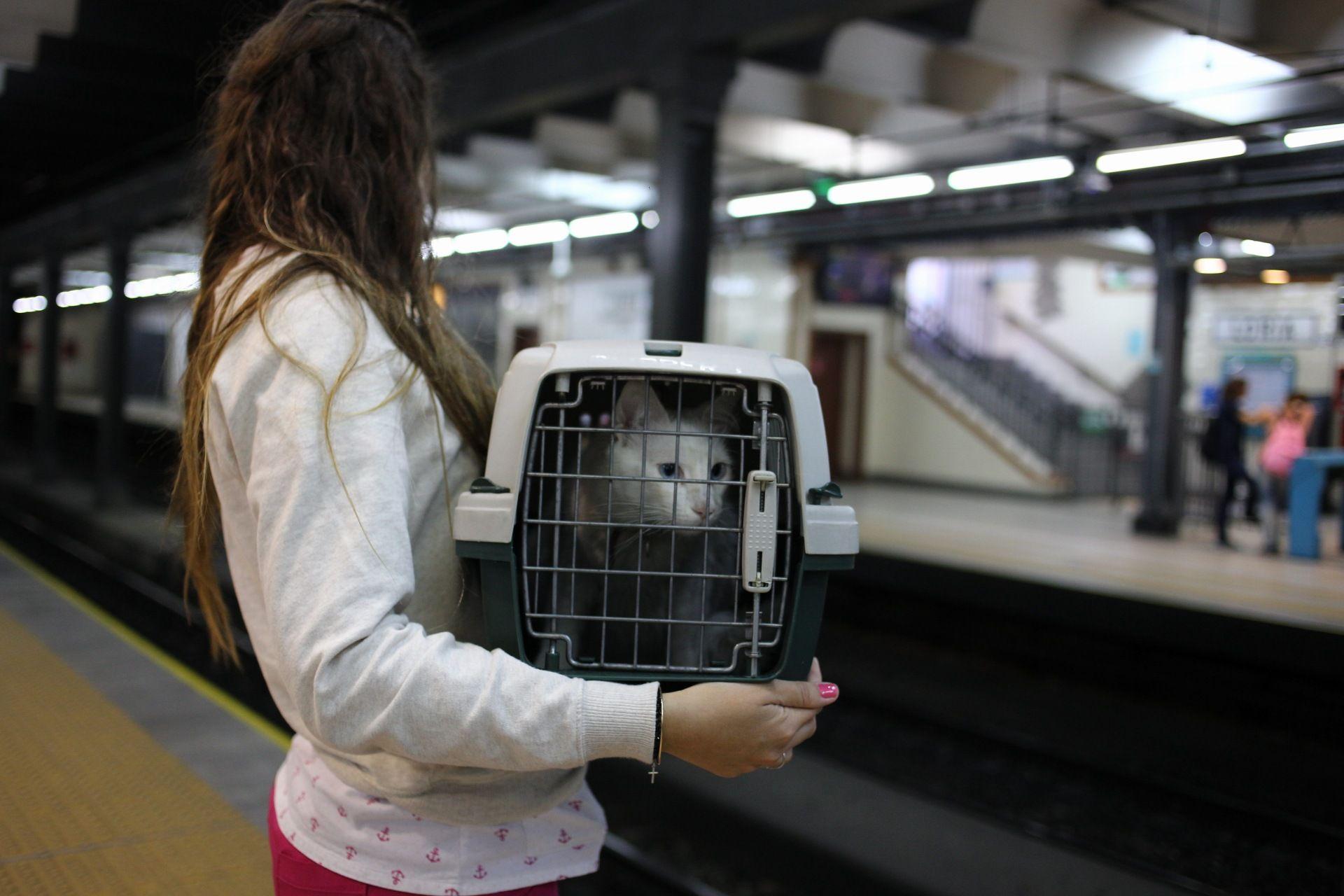 Las mascotas ya podrán viajar en Subte
