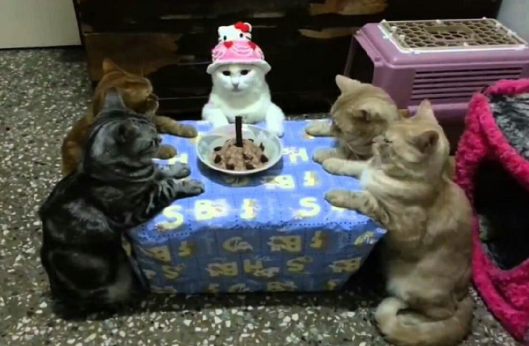Macri se tomó vacaciones por su cumpleaños y en las redes no faltaron los memes