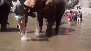 Elefante golpea a mujer en Tailandia