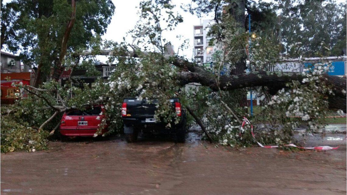 La caída de árboles provocó destrozos