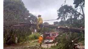 Cayeron cientos de árboles por el temporal