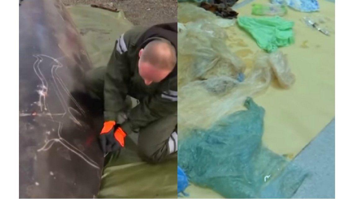La autopsia a una ballena enferma