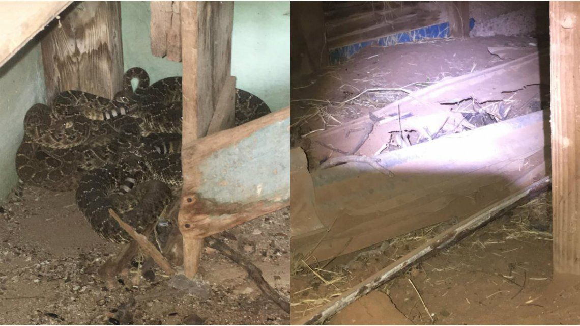 El nido de serpientes estaba en los cimientos